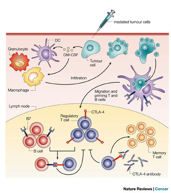 Vắc xin ung thư  liệu đã có chưa 5